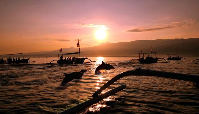 Dolphin Lovina Bali