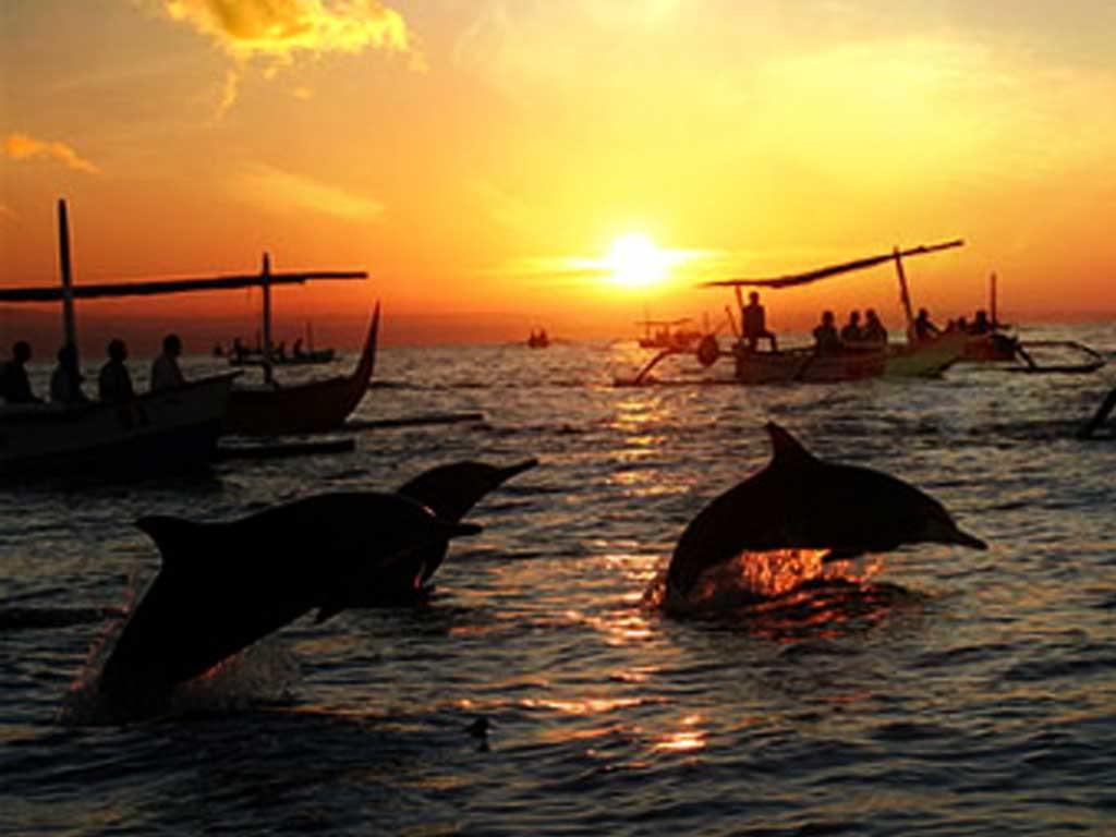 Tiket Dolphin Lovina