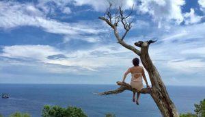 Pohon untuk menikmati Honeymoon di Nusa Penida
