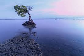 Pantai Pemuteran - Bali